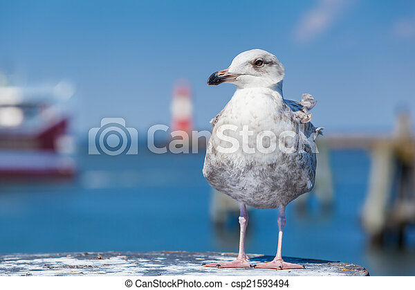 港, 鳥 - csp21593494
