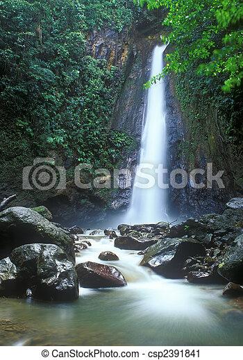 滝, ジャングル - csp2391841