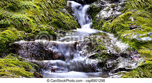 滝 - csp8901298