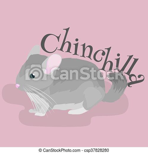 灰色 動物 国内 イラスト ベクトル 背景 チンチラ 白 ペット