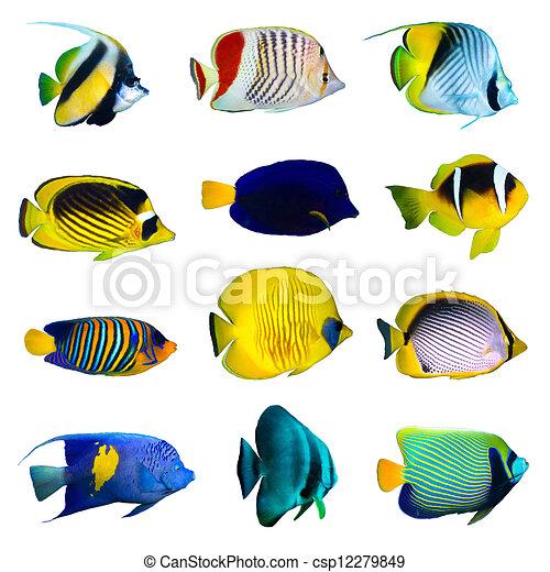 熱帯 魚, コレクション - csp12279849