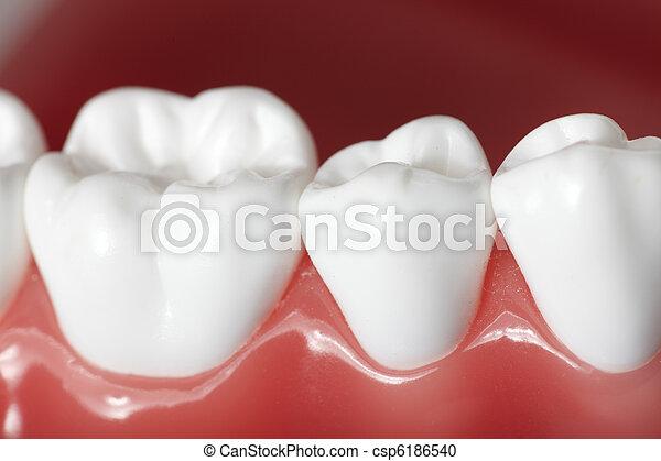 牙齒 - csp6186540