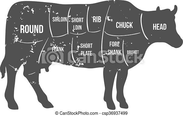 牛肉, 型, 肉屋, 図, ベクトル, 切口 - csp36937499