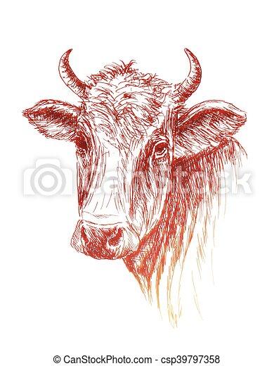 牛, 顔, 背景, 引かれる, 白, 手 - csp39797358
