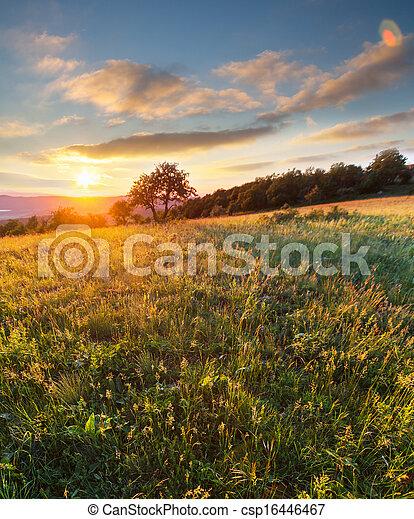牧草地 - csp16446467