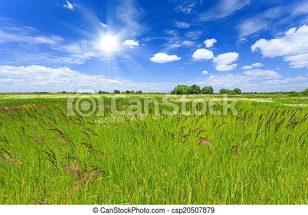 牧草地 - csp20507879