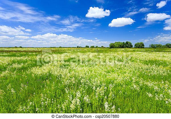 牧草地 - csp20507880