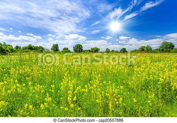 牧草地 - csp20507886
