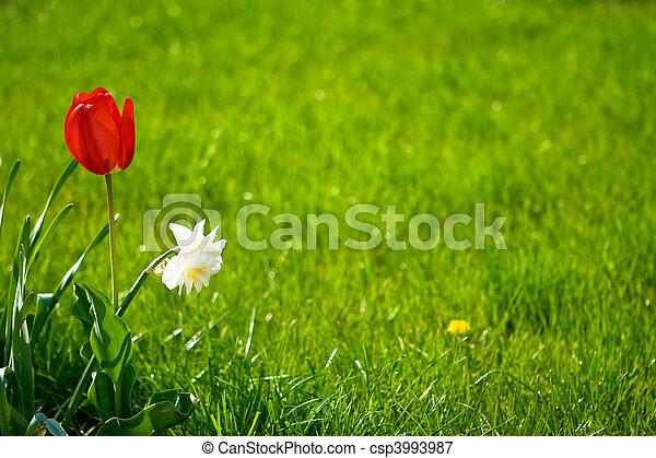 牧草地 - csp3993987