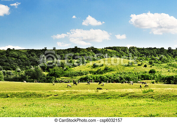 牧草地 - csp6032157