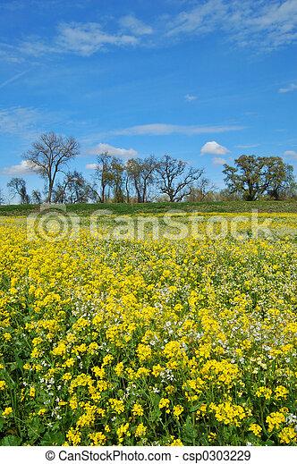 牧草地, 春 - csp0303229
