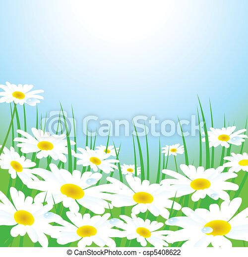 牧草地, chamomiles - csp5408622