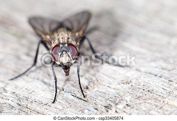 特寫鏡頭, fly. - csp33405874