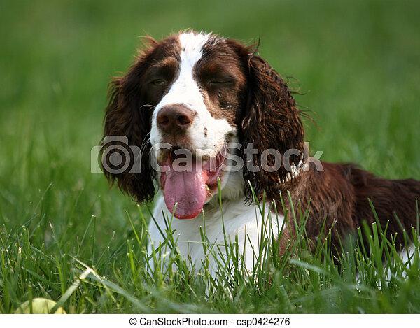 犬, 幸せ - csp0424276
