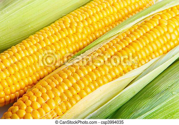 玉米 - csp3994035
