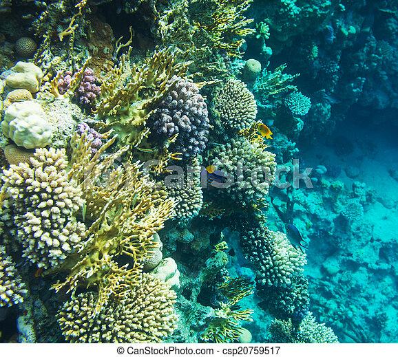 珊瑚礁 - csp20759517