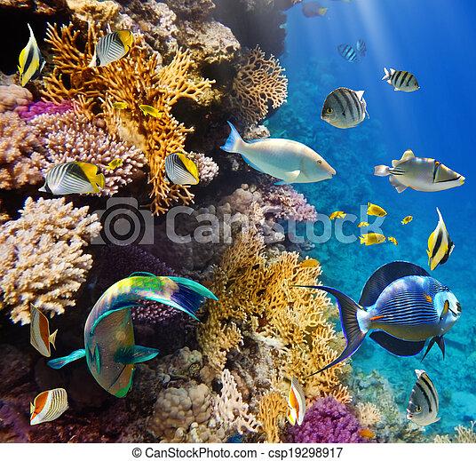 珊瑚, 殖民地, fish - csp19298917
