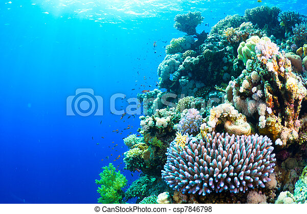 珊瑚, fish - csp7846798