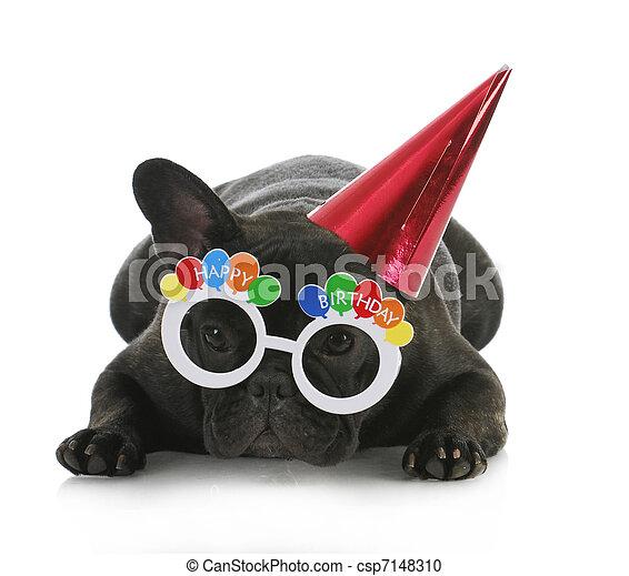 生日, 狗 - csp7148310