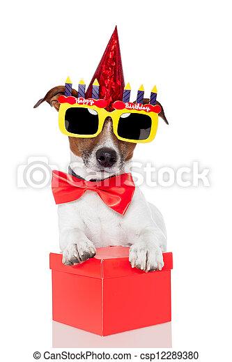 生日, 狗 - csp12289380