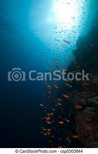 生活, 熱帶, sea., 礁石, 陸戰隊, 紅色 - csp5303844