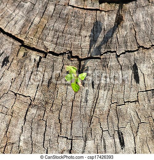生長, 小, 植物, stump., 樹 - csp17426393