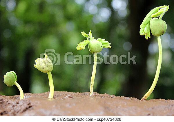 生長, 植物, 計劃, growth-stages - csp40734828