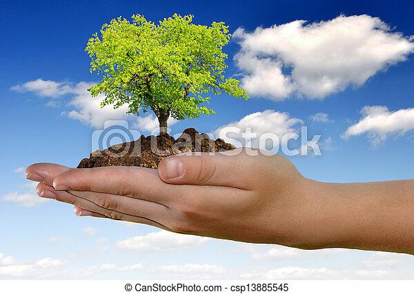 生長, 樹, 手 - csp13885545