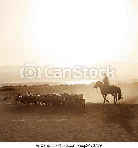 男の子, sheeps, 群れ, mongolian, 群れ - csp2473739