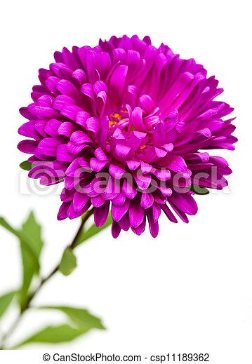 白い花, 背景 - csp11189362