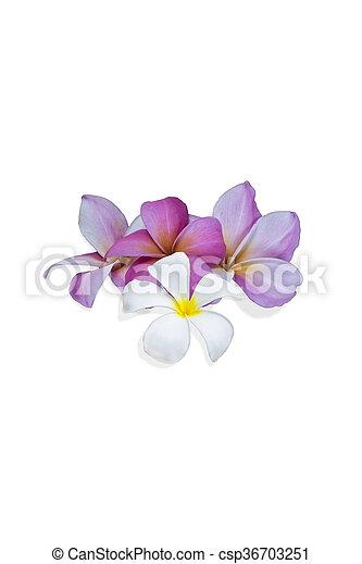 白い花, 背景 - csp36703251