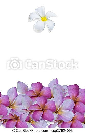 白い花, 背景 - csp37924093