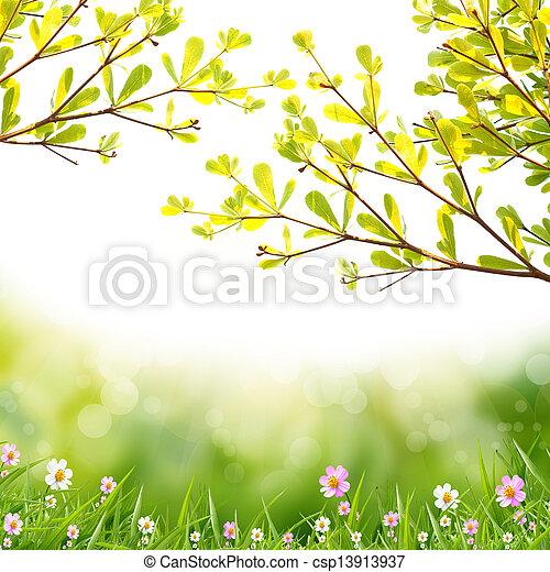 白い花, 背景 - csp13913937