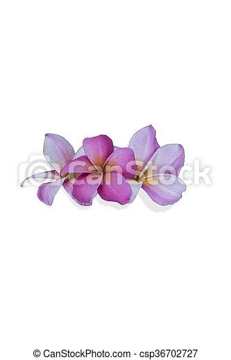 白い花, 背景 - csp36702727