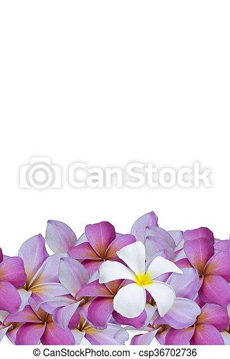 白い花, 背景 - csp36702736