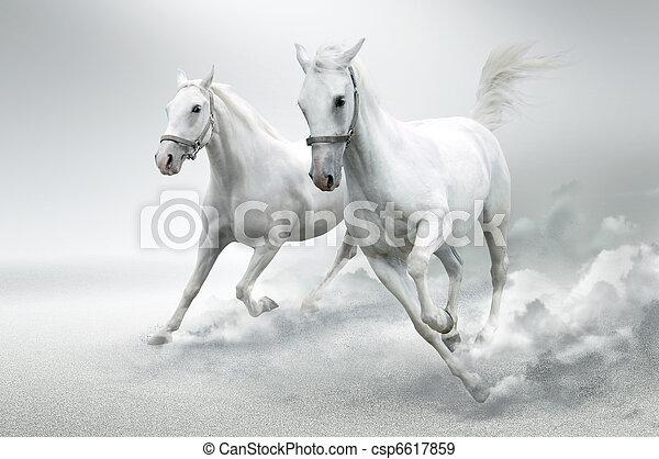 白色 馬 - csp6617859