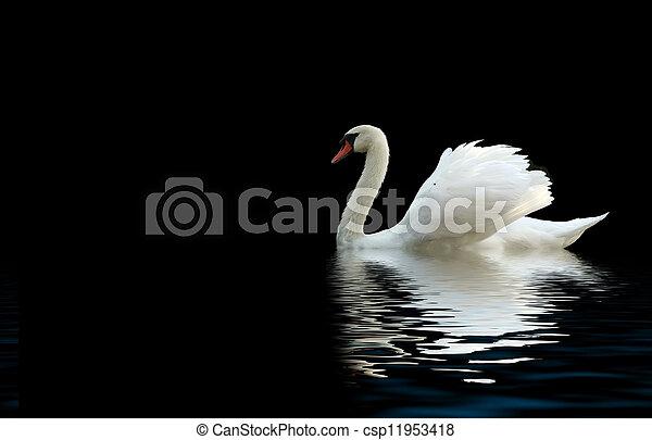 白鳥 - csp11953418