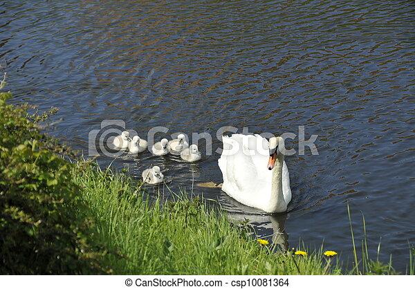白鳥, 家族 - csp10081364