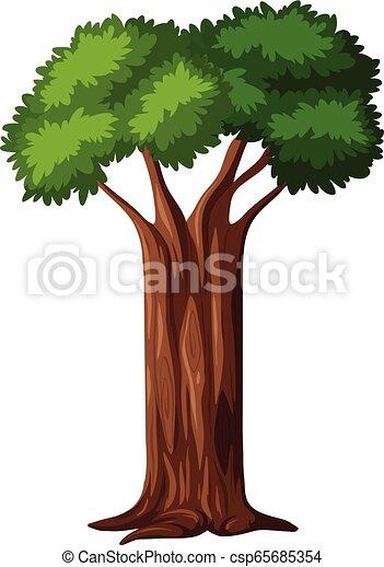 白, 木, 隔離された, 背景 - csp65685354