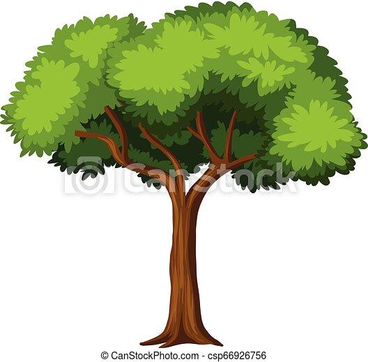 白, 木, 隔離された, 背景 - csp66926756