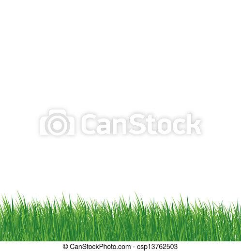 白, 草, 背景 - csp13762503