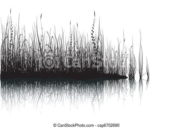 白, 草, -, 隔離された - csp6702690