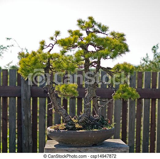 盆栽, ポット - csp14947872
