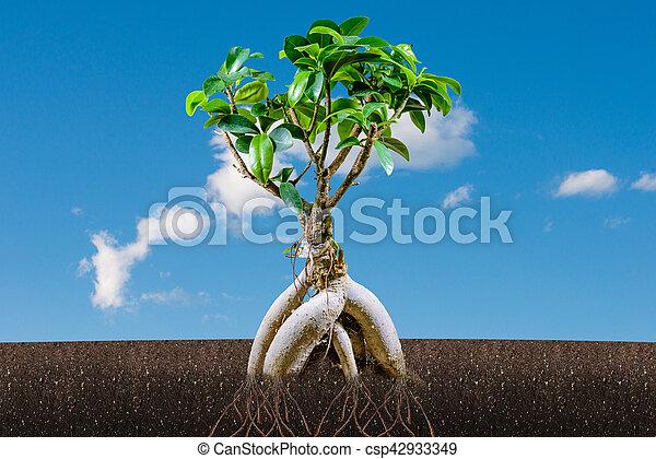 盆栽, 青, 木, 空, 成長, 支持できる, concept: - csp42933349