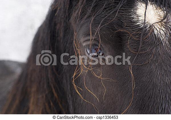 目, horse. - csp1336453