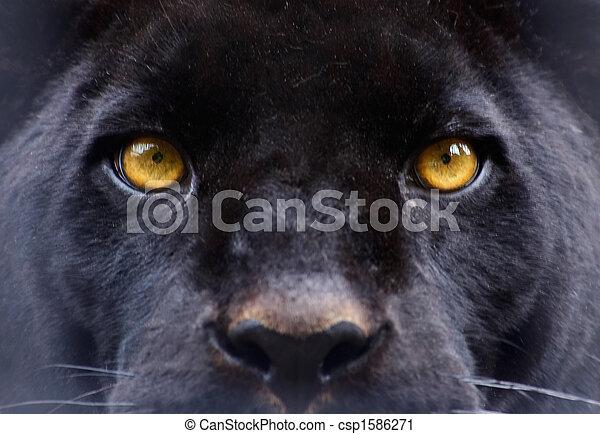 眼睛, 黑色的豹 - csp1586271