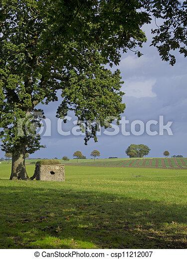 石, フィールド, オーク, 巨人, 木, 小屋, 下に - csp11212007