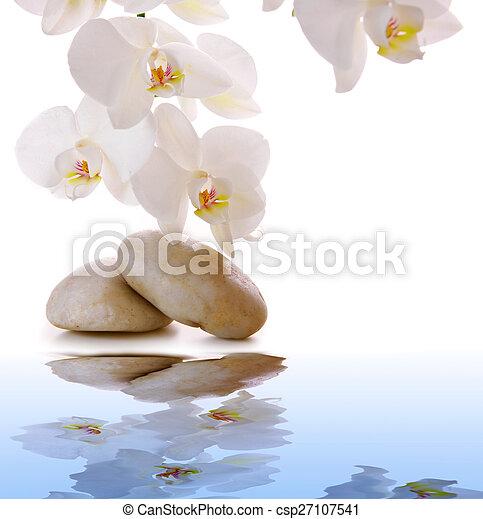 石, 白, マッサージ, orchid. - csp27107541