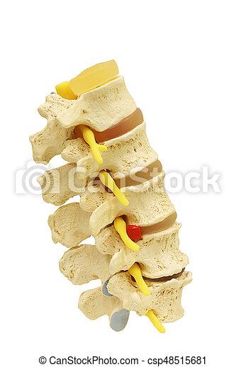 神経, 切り抜き, 背骨, 隔離された, 背骨, path. - csp48515681