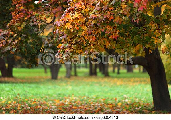 秋の木 - csp6004313